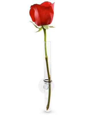 Uma flor em um tubo de ensaio (Foto: Reprodução)