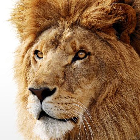 Mac OS Lion (Foto: Reprodução)