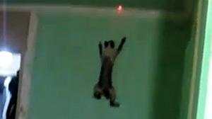 Gato escala parede como se fosse o Homem-Aranha (Foto: Reprodução)