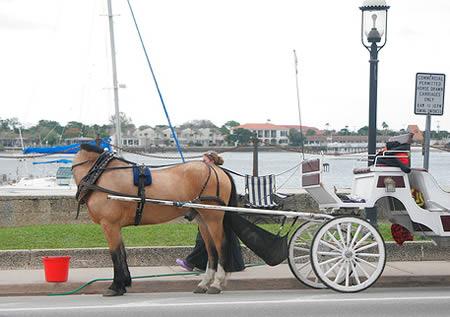 Cavalo sem cabeça (Foto: Reprodução)