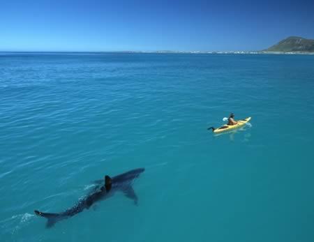 O ataque do tubarão (Foto: Reprodução)