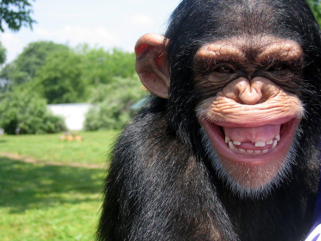 Macacos virtuais reproduzem obras de Shakespeare. Será? (Foto: Divulgação)