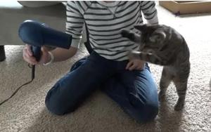 Oskar, o gatinho cego (Foto: Reprodução)