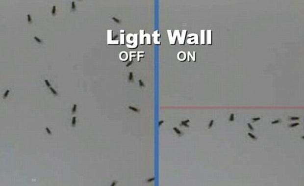 Repelente de insetos a laser (Foto: Reprodução/Daily Mail)