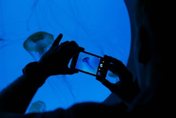 Brian Skerry, fotógrafo da National Geographic, captura sua foto usando o LG Optimus 3D no Aquário de New England. (Foto: Reprodução)