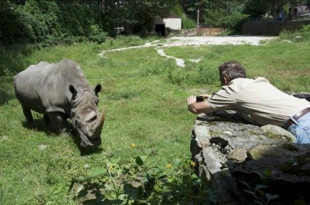 Brian Skerry, fotojornalista da National Geographic, fotografa rinoceronte no Zoológico de Southwick. (Foto: Reprodução)