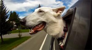 Cão na janela do carro (Foto: Reprodução)