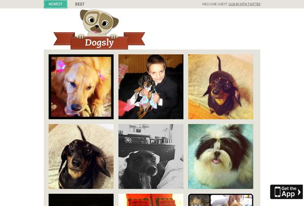 Dogsly é uma rede social exclusiva para fotos de cachorros (Foto: Reprodução)