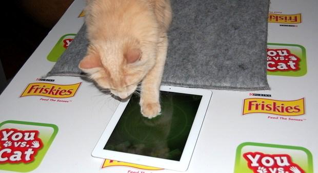 Buddy joga You vs. Cat (Foto: Reprodução/BuzzFeed)
