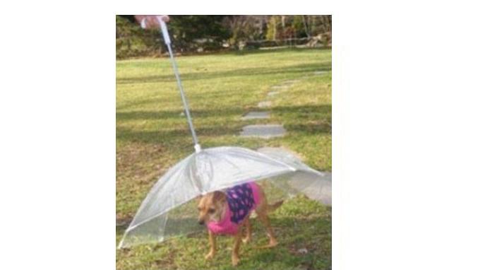 Guarda chuva para cachorro (Foto: Divulgação)