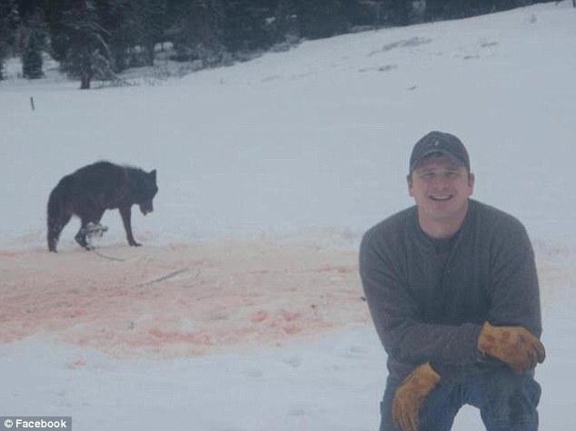 Caçador posa para foto após prender lobo em armadilha (Foto: Reprodução)