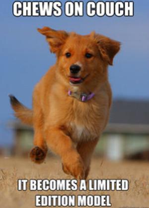 Meme com cachorrinho fotogênico é o novo hit na web (Foto: Reprodução)
