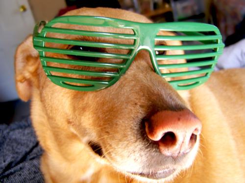 Animals With Glasses mostra bichinhos de óculos (Foto: Reprodução)