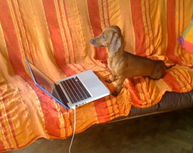 Cachorro brincando no MacBook de seu dono (Foto: Reprodução)
