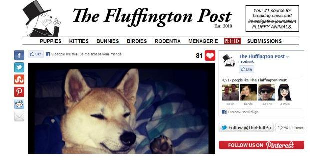 Fluffington reúne bichinhos peludos no Tumblr (Foto: Reprodução)