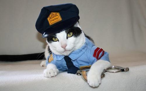 Gato policial é um dos destaques do Cats Wearing Sueters (Foto: Reprodução)