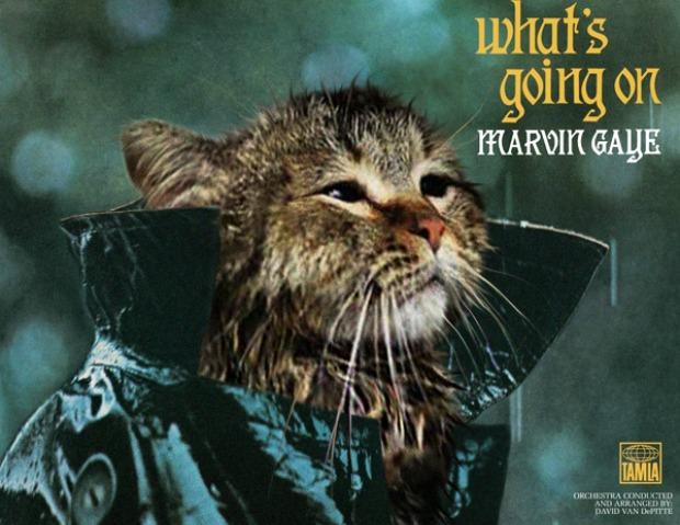 Marvin Gaye foi substituído por um gato no Tumblr (Foto: Reprodução)