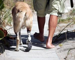 01 - Cassidy, prótese que pode ser utilizada em humanos