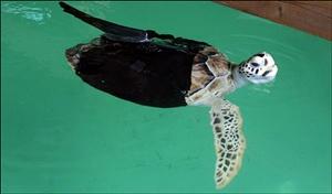 05 - Alisson, roupa ninja para voltar a nadar