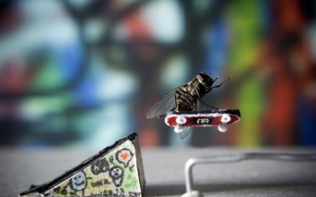 Mosca posa de skatista. Porém, ela precisou ser abatida para ficar na posição (Foto: Nicholas Hendrickx)