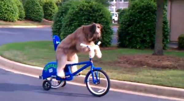 Norman andando de bicicleta (Foto: Reprodução)