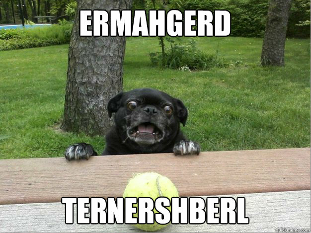 Cão apelidado de Berks Dog (Foto: Reprodução)