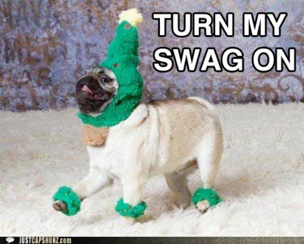 Cãozinho ativou o seu estilo com essa roupa (Foto: Reprodução)