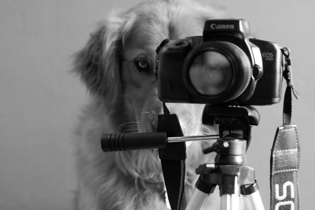 Golden Retriever da menina está até aprendendo a fotografar (Foto: Reprodução)