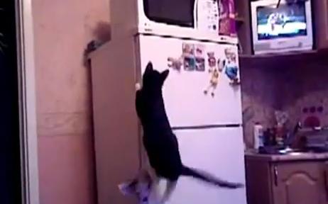 Gatinho aventureiro é um hit no YouTube (Foto: Reprodução/YouTube)