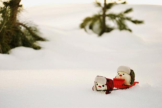 Foto dos dentes de leite na neve (Foto: Inhae Renee Lee)