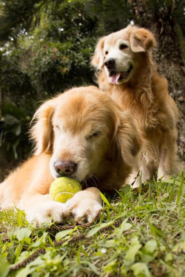 Cães. Feita com Canon T3i (Foto: Gustavo Darzi)