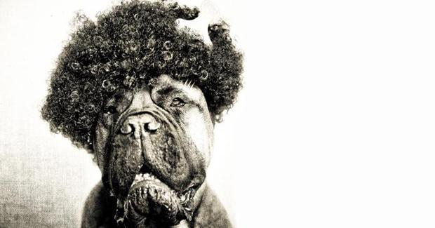 Rocco com peruca black power (Foto: Reprodução/ Serena Hodson)