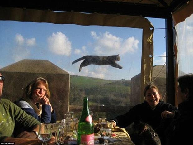 Gato voador rouba a cena na foto (Foto: Reprodução)