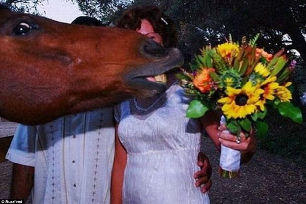 Cavalo estraga foto de recém-casados (Foto: Reprodução)