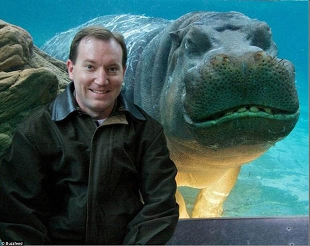 Hipopótamo simpático divide foto com visitante de parque aquático (Foto: Reprodução)