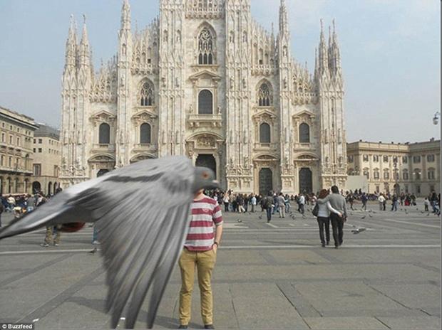 Pombo passa na frente da câmera no momento da foto (Foto: Reprodução)