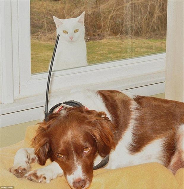 Gato branco observa cachorro pela janela (Foto: Reprodução)
