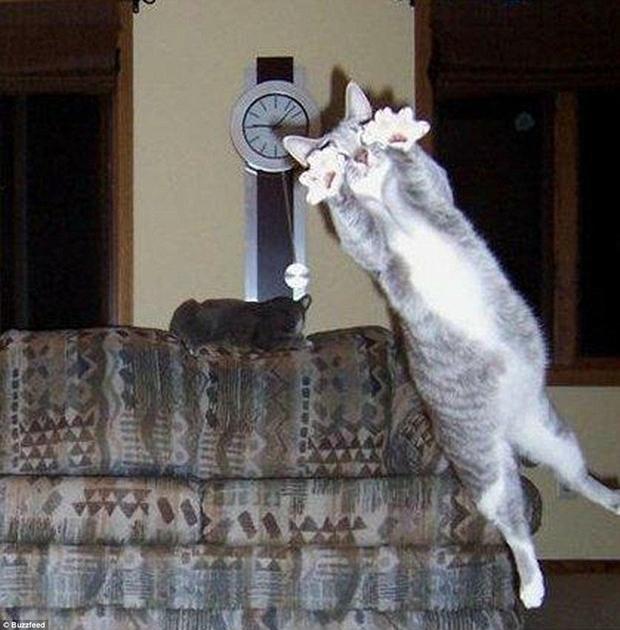 Gato salta na frente da câmera e protagoniza photobomb (Foto: Reprodução)