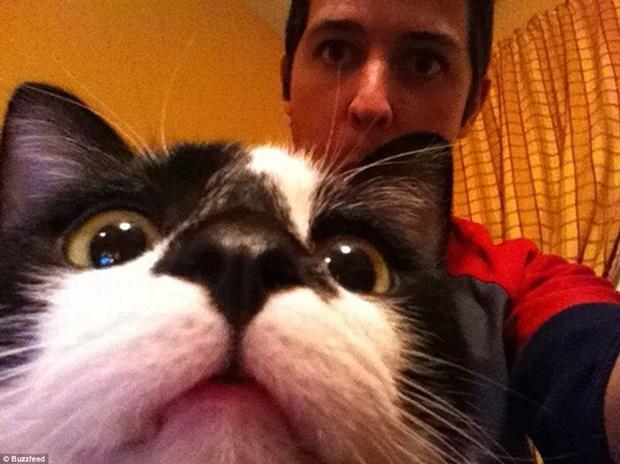 Gato ocupa quase toda a fotografia (Foto: Reprodução)