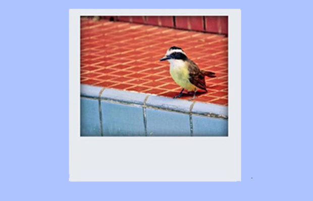 Foto com efeito Polaroid (Foto: Reprodução)