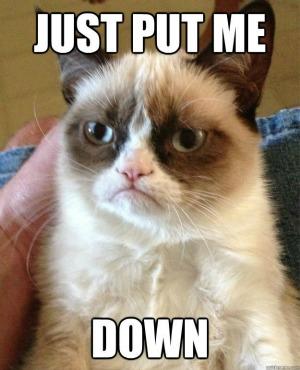 Gatinho com cara de mau virou febre na web (Foto: Reprodução)