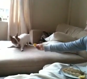 Cão fugindo de limão virou hit no YouTube (Foto: Reprodução)
