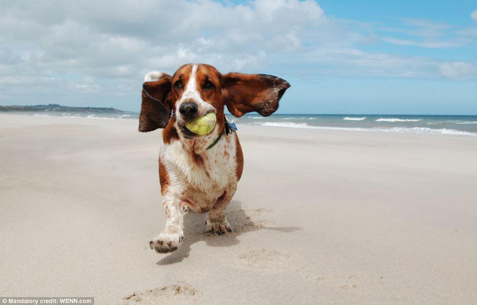 Imagem de cão brincando com bola levou o primeiro lugar na categoria de brincadeiras (Foto: Doug Jewell)