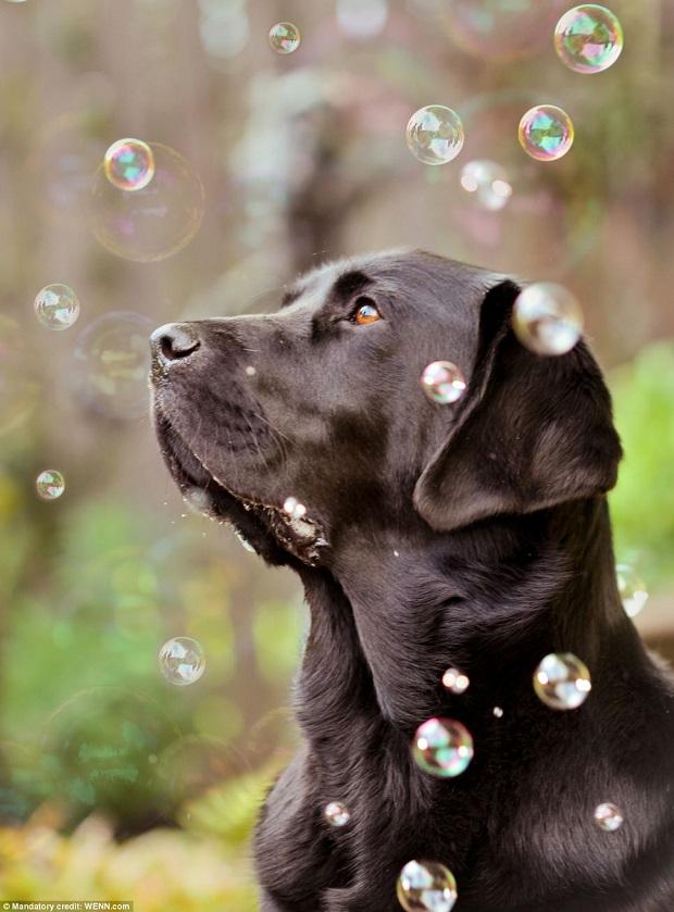 Cão negro ganhou prêmio na categoria sub-16 (Foto: Reprodução)