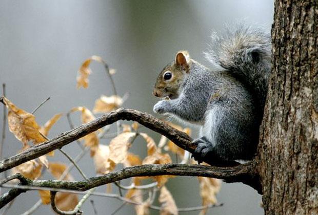 Esquilo (Foto: Reprodução)