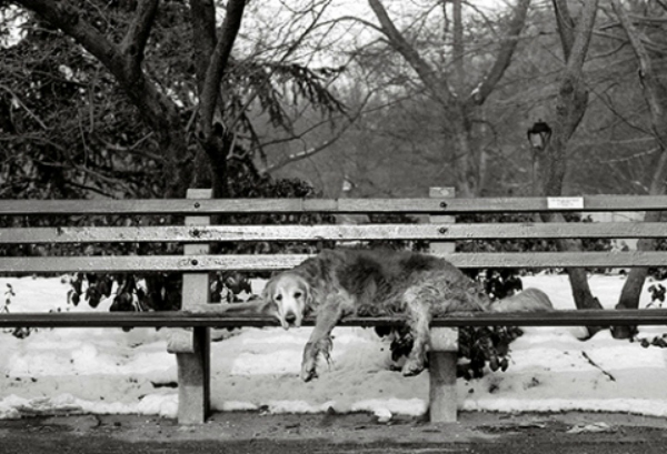Cooper, 15 anos, Central Park (Foto: Nancy LeVine )