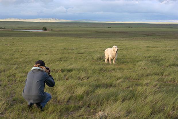 Nancy LeVine fotografando um cão durante suas viagens (Foto: Nacy LeVine)