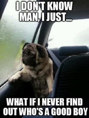 Meme com pug se tornou famoso na web (Foto: Reprodução)