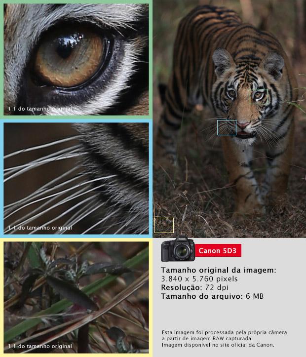 Imagem capturada pela Canon 5D MKIII (Foto: Divulgação)