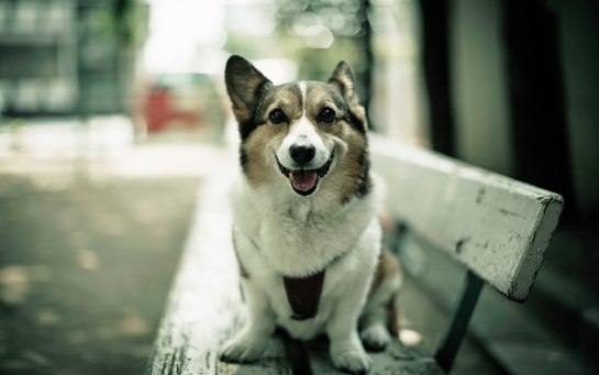 Cachorro como objeto central da foto, em foco (Foto: Reprodução)
